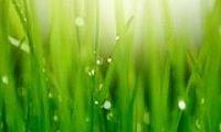Artificial Grass Dubai LLC
