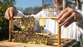Beekeeping_Training__Education_grid.jpg