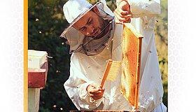 Beekeeping_Training__Consultation_grid.jpg