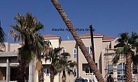PALM TREE IN DUBAI 0526277568