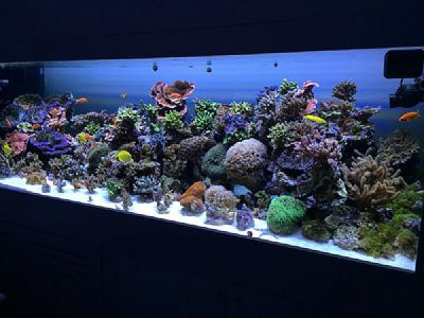 Aquariums Fish Tank Maintenance service available In UAE