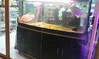 Used Aquarium For Sale with cabinet