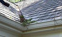 Labor Panes Window Cleaning Greensboro