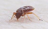 Hydrex Termite & Pest Control