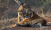 Ranthambore National Park Safari Booking in Fastest Way with Affordable Package